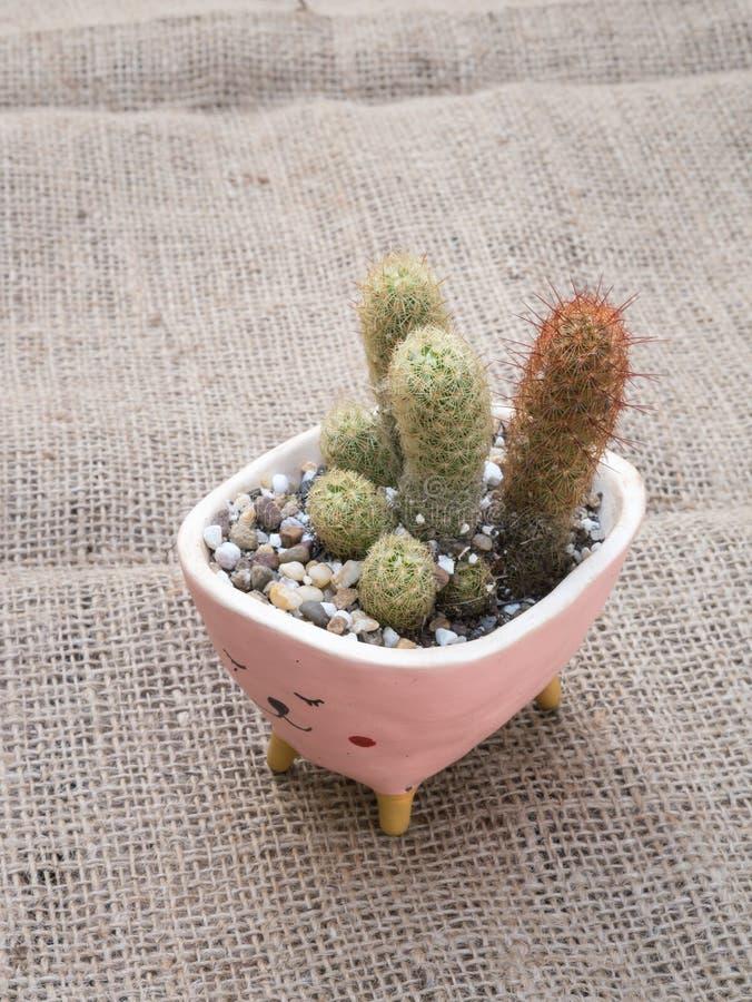 Cactus dans le pot de fleur sur la toile à sac photographie stock