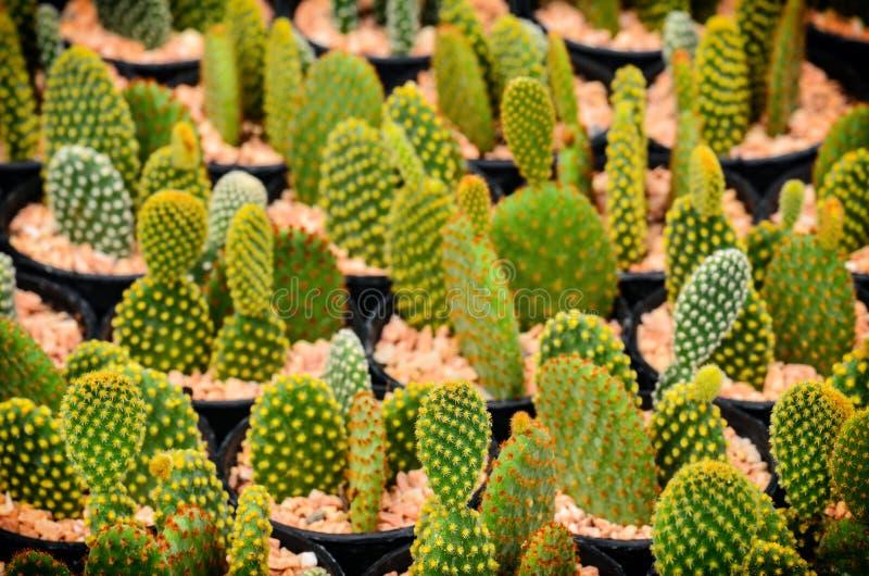 Cactus dans le pot en plastique image libre de droits