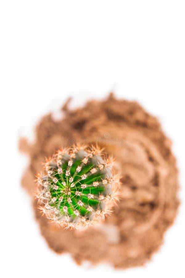 Cactus dans le sable photo stock