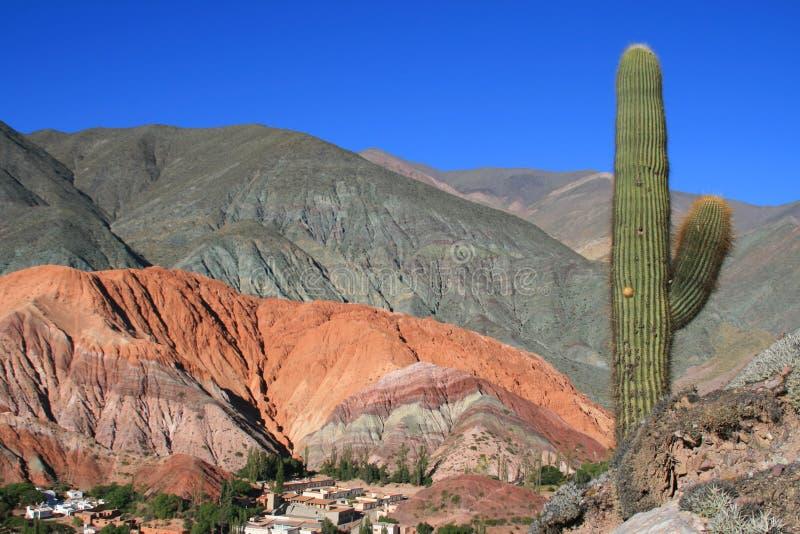 Cactus dans les déserts l'après-midi photos libres de droits