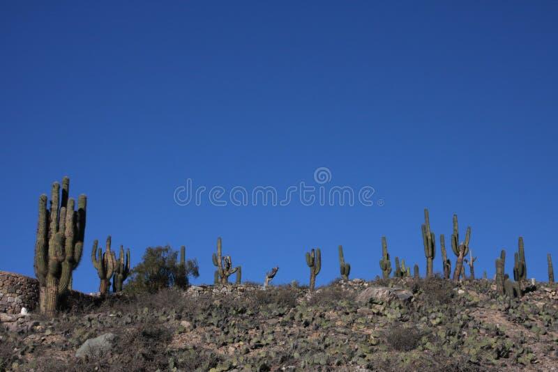 Cactus dans Tilcara photos stock