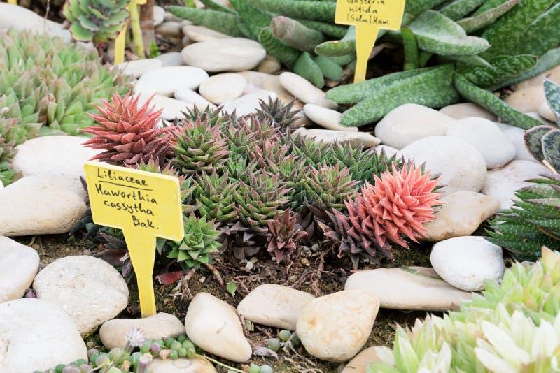 Cactus dans un jardin botanique, Balchik, Bulgarie photographie stock libre de droits