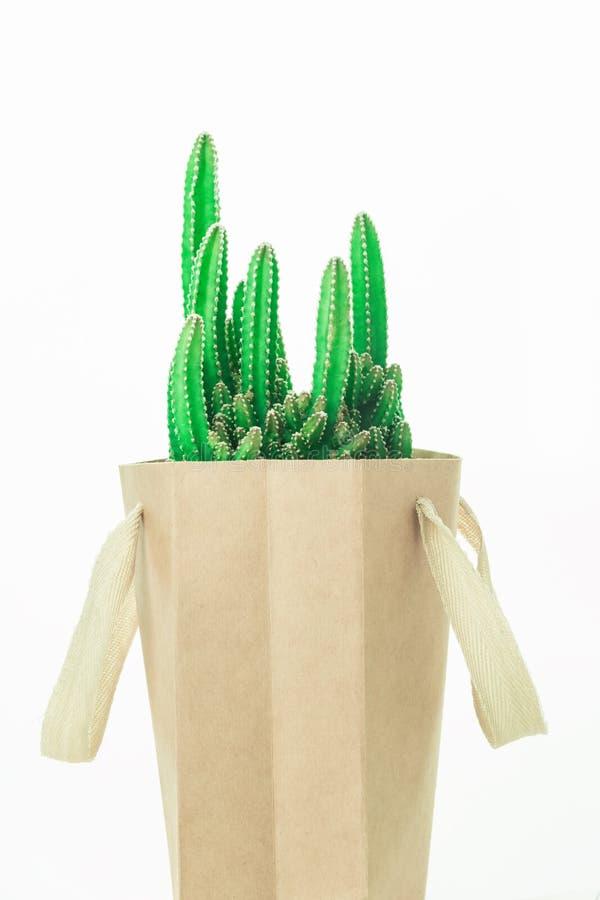 Cactus dans un sac de papier isolaed sur le blanc photos stock