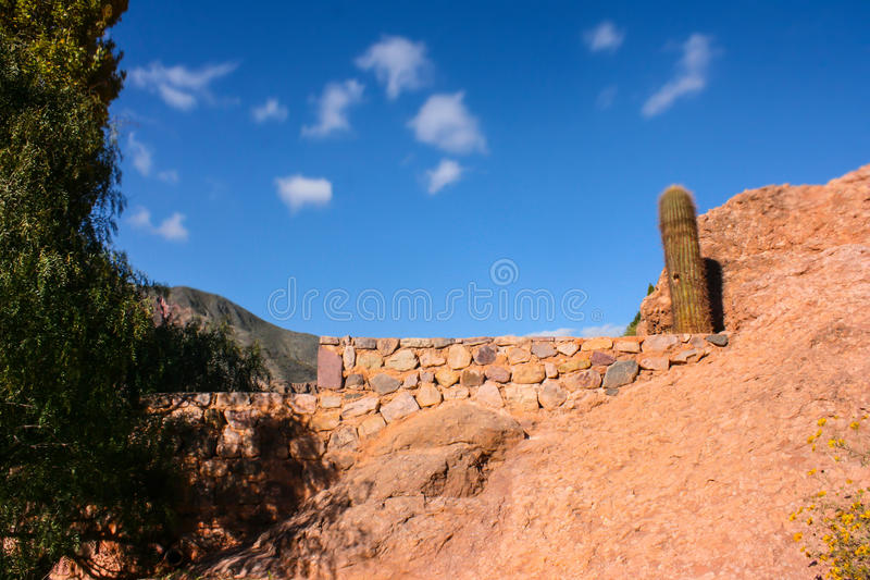 Cactus in de bergen in Salta royalty-vrije stock foto's