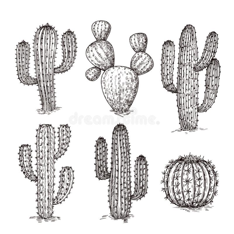 Cactus de croquis Cactus tirés par la main de désert Cru gravant l'ensemble mexicain occidental de vecteur d'usines illustration stock
