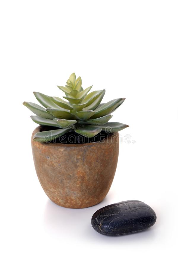 Cactus de décoration avec la pierre noire photo libre de droits