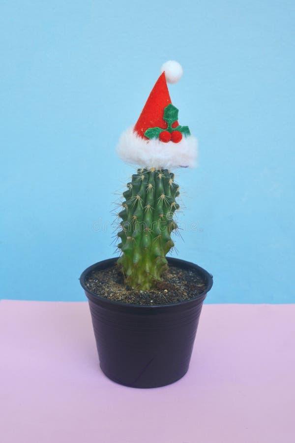 Cactus de floraison avec le chapeau de Santa avec l'espace de copie, thème de Noël image libre de droits