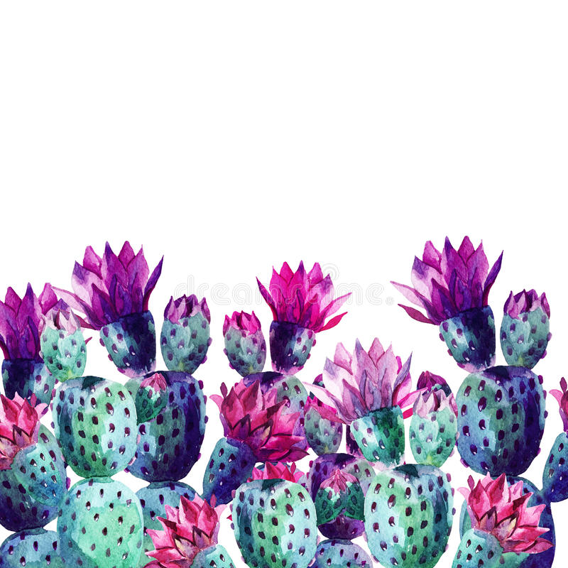 Cactus de la acuarela ilustración del vector