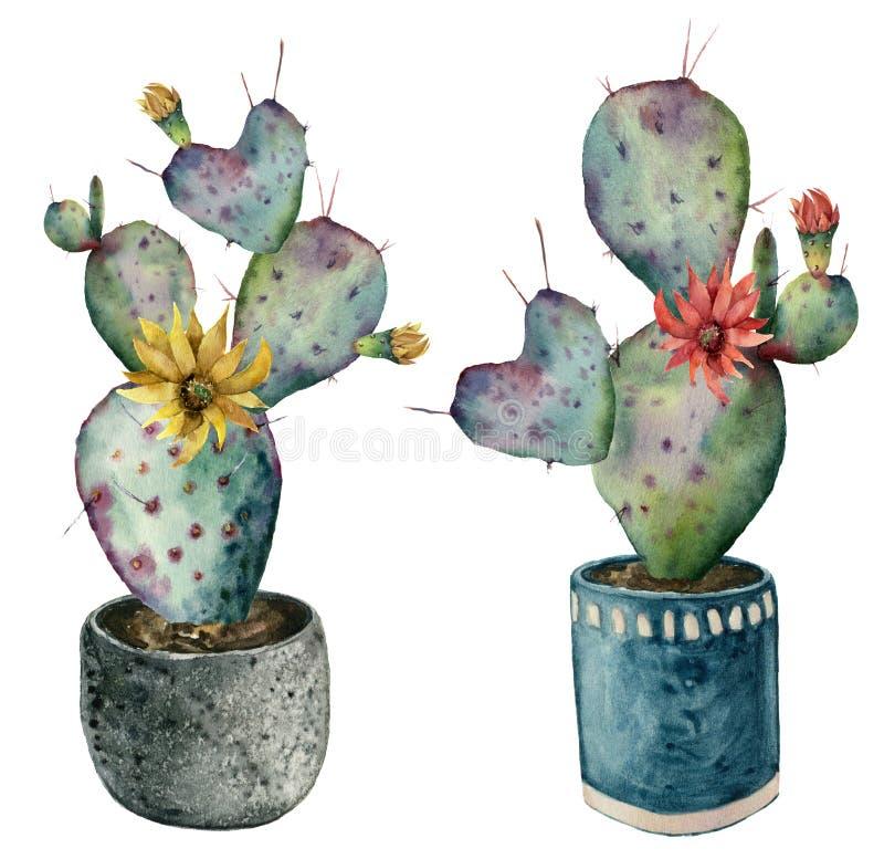 Cactus de la acuarela con las flores en un pote Opuntia pintada a mano con las flores rojas y amarillas aisladas en el fondo blan libre illustration