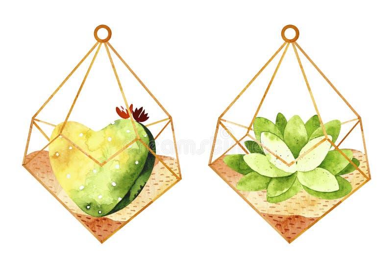 Cactus de la acuarela en florariums libre illustration