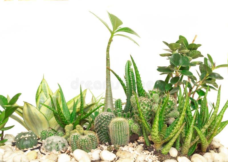 Cactus de la colección aislado en el fondo blanco fotografía de archivo libre de regalías