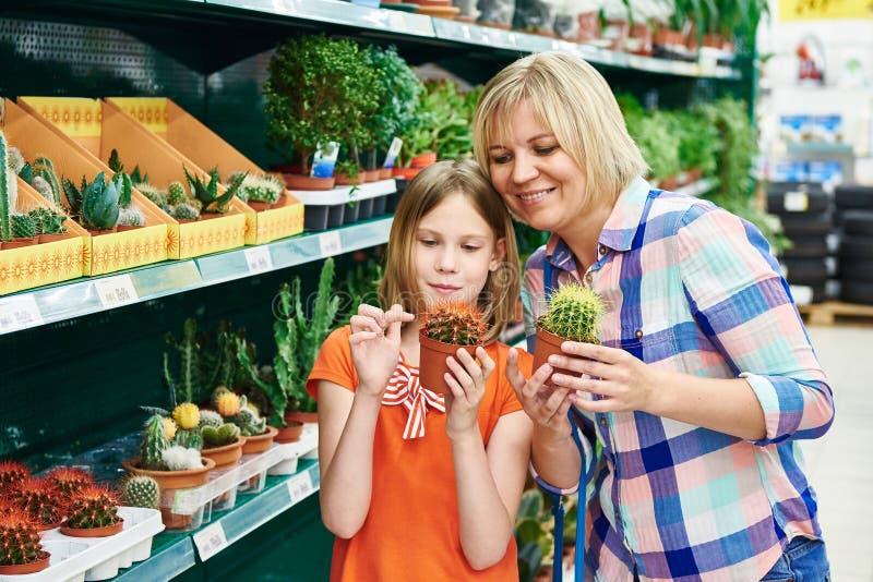 Cactus de las compras de la madre y de la hija fotografía de archivo libre de regalías