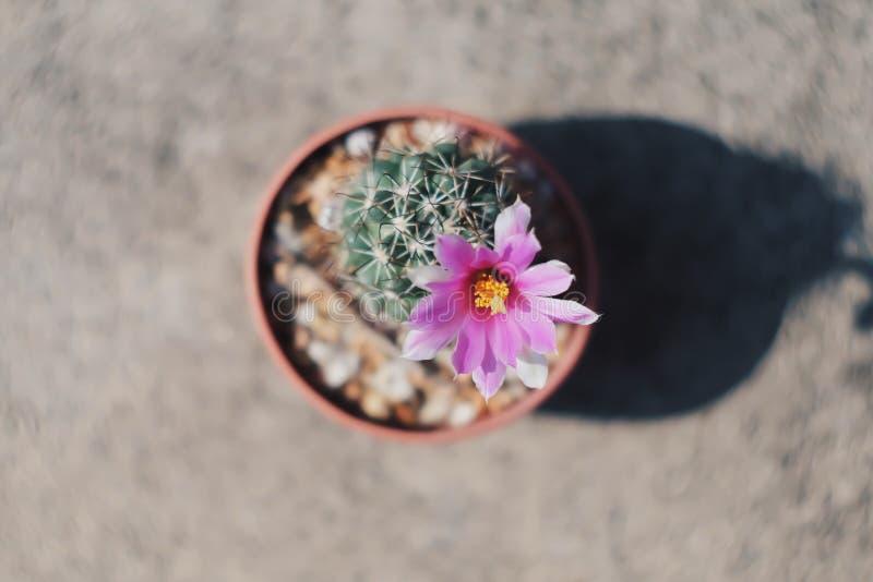 Cactus de moi image stock
