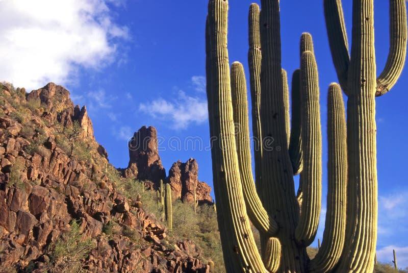Cactus de montagnes de superstition images stock