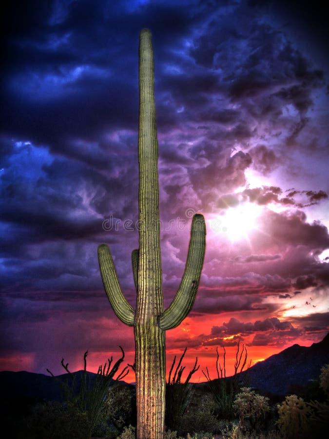 Cactus de Saguaro avec des nuages et le coucher du soleil de mousson photos libres de droits