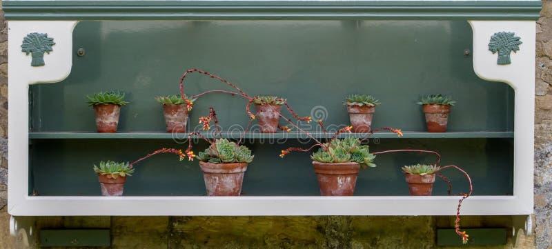 Cactus de sedum dans le vieux pot d'usine de victorian photographie stock