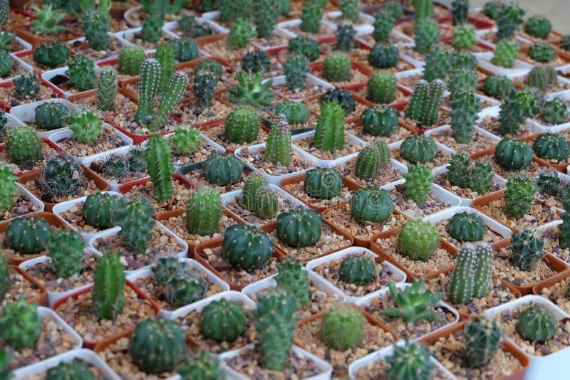 Cactus in de tuin royalty-vrije stock fotografie
