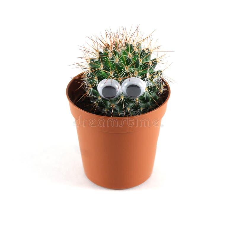 Cactus decorativo en un pote foto de archivo