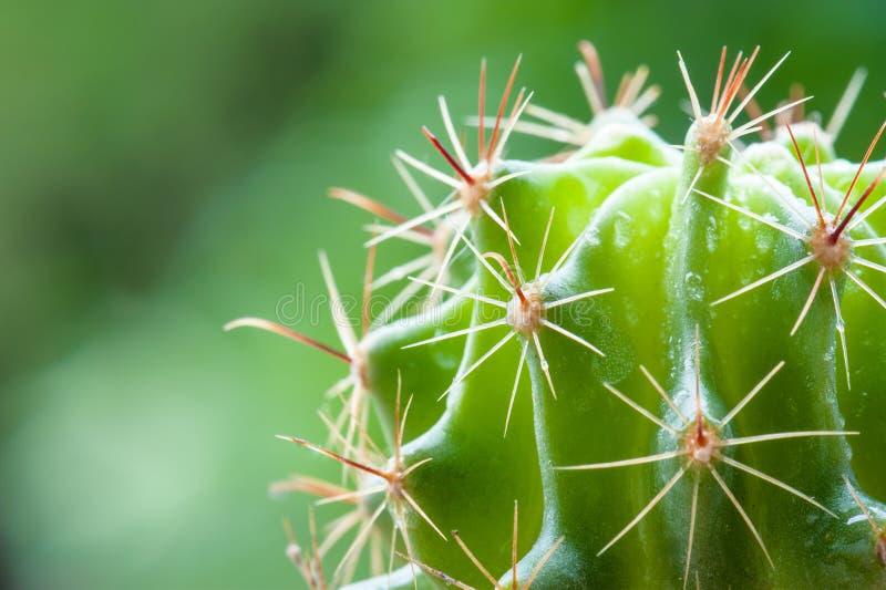 Cactus del giardino fotografia stock