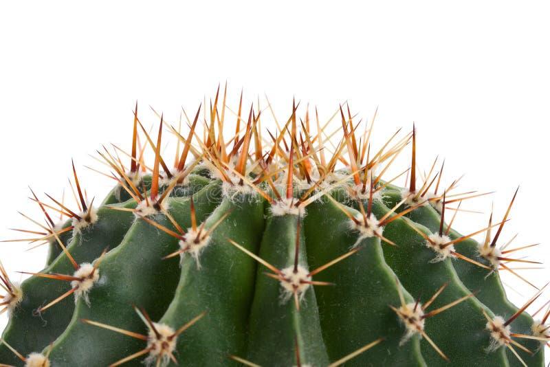 Cactus del primo piano immagini stock