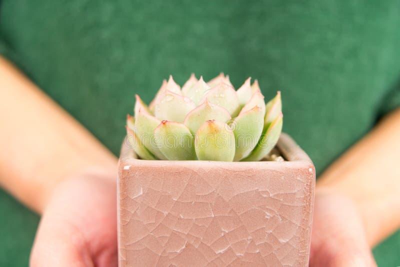Cactus del primo piano nella tenuta del vaso sulla mano delle donne con lo spazio della copia, giorno ambientale immagine stock