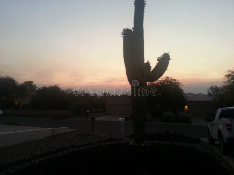 Cactus del Saguaro fotos de archivo