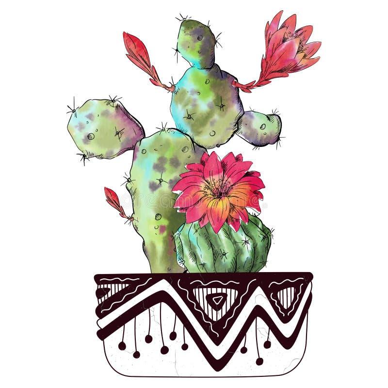 Cactus dell'acquerello isolato su fondo bianco illustrazione di stock