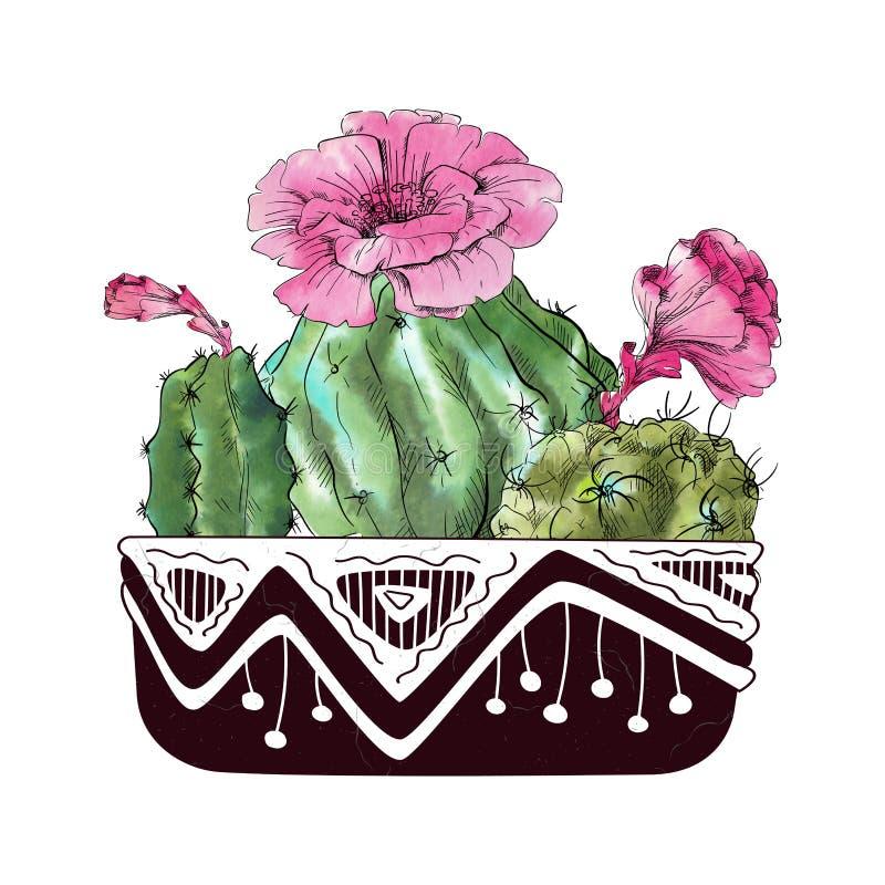 Cactus dell'acquerello isolato su fondo bianco illustrazione vettoriale