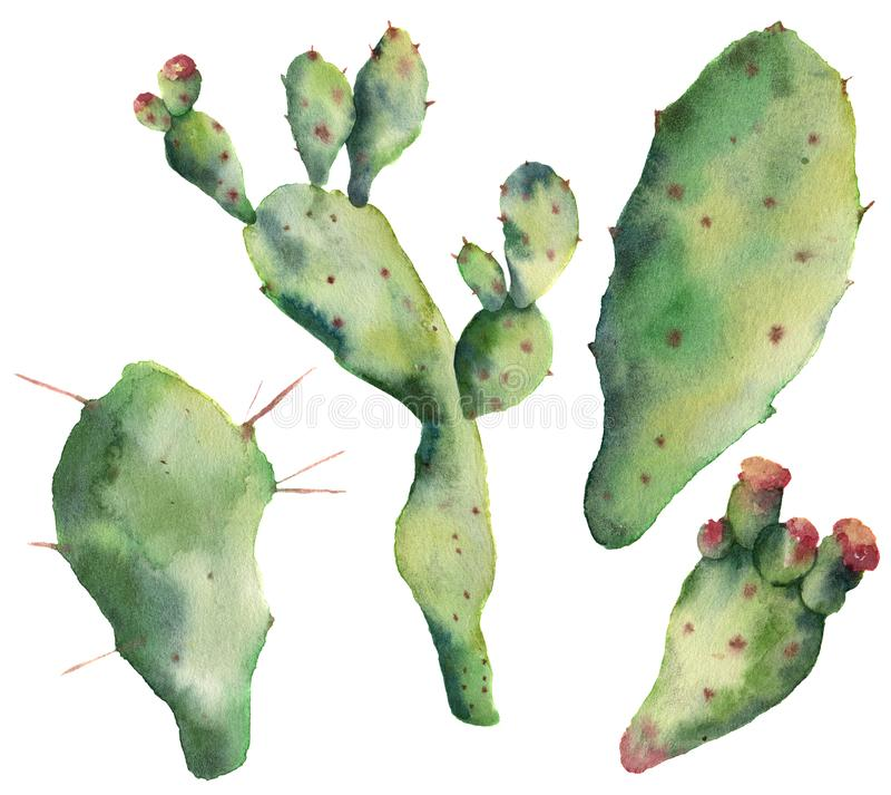 Cactus dell'acquerello messo con i fiori Opunzia dipinta a mano isolata su fondo bianco Illustrazione per progettazione, stampa royalty illustrazione gratis