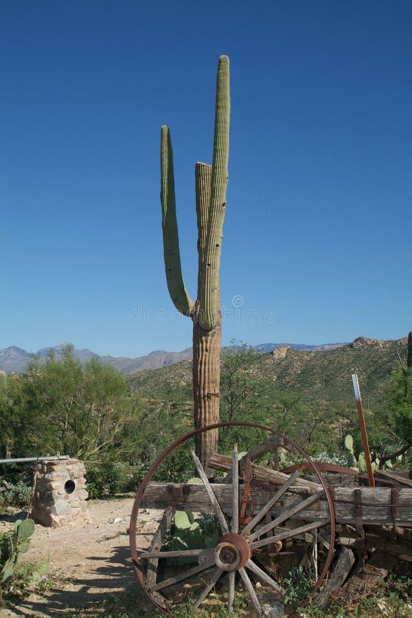 Download Cactus dell'Arizona immagine stock. Immagine di cielo - 3132755
