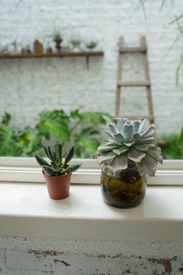 Cactus della finestra immagini stock