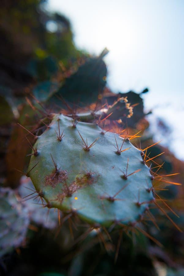 Cactus della punta fotografia stock