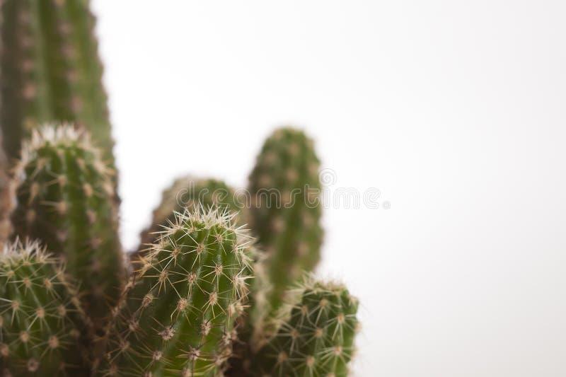 Cactus della stanza fotografia stock libera da diritti