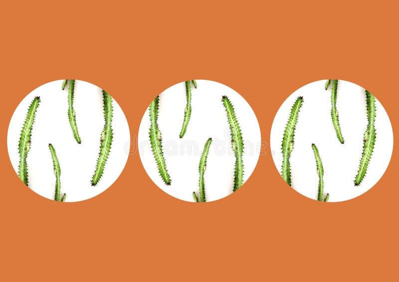 Cactus dentro de los círculos, aislados imagen de archivo libre de regalías