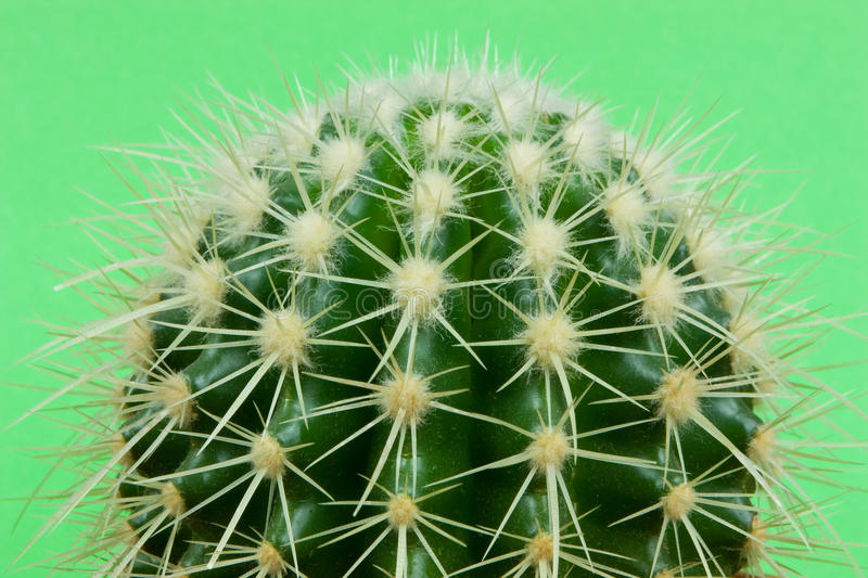 Cactus Detail Royalty Free Stock Images