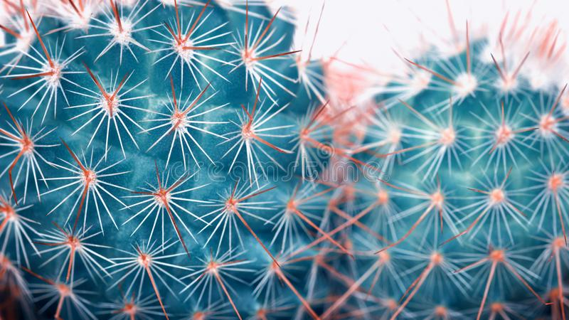 Cactus detail closeup Art Fashion Design. Cacti Minimal concept. Blue neon Mood on white background. Trendy Bright Color. stock photos