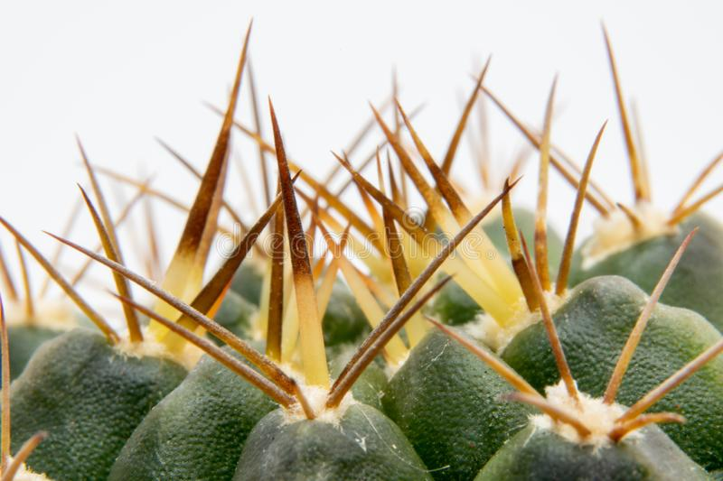 Cactus - details od spines stock image