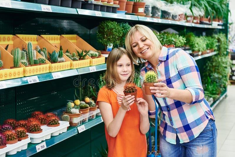 Cactus di acquisto della figlia e della madre fotografia stock