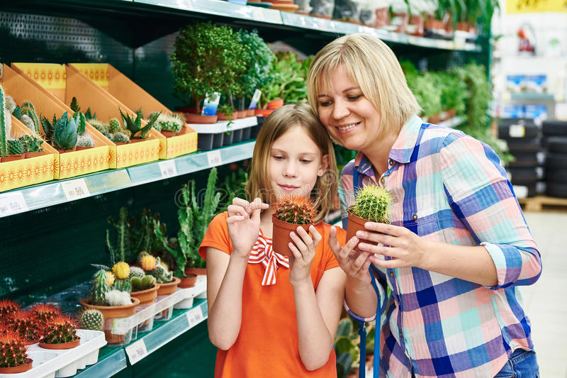 Cactus di acquisto della figlia e della madre fotografia stock libera da diritti