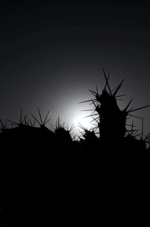 Cactus di Silouhetted della lampadina fotografia stock libera da diritti