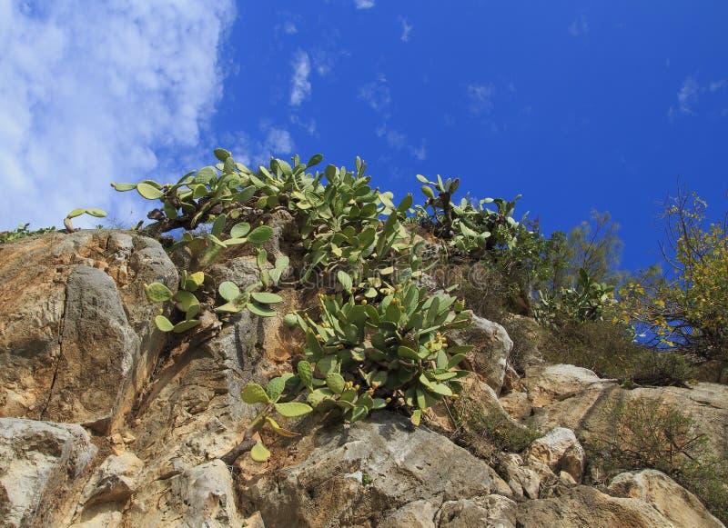 Cactus di vista su una roccia Nauplia La Grecia fotografie stock libere da diritti