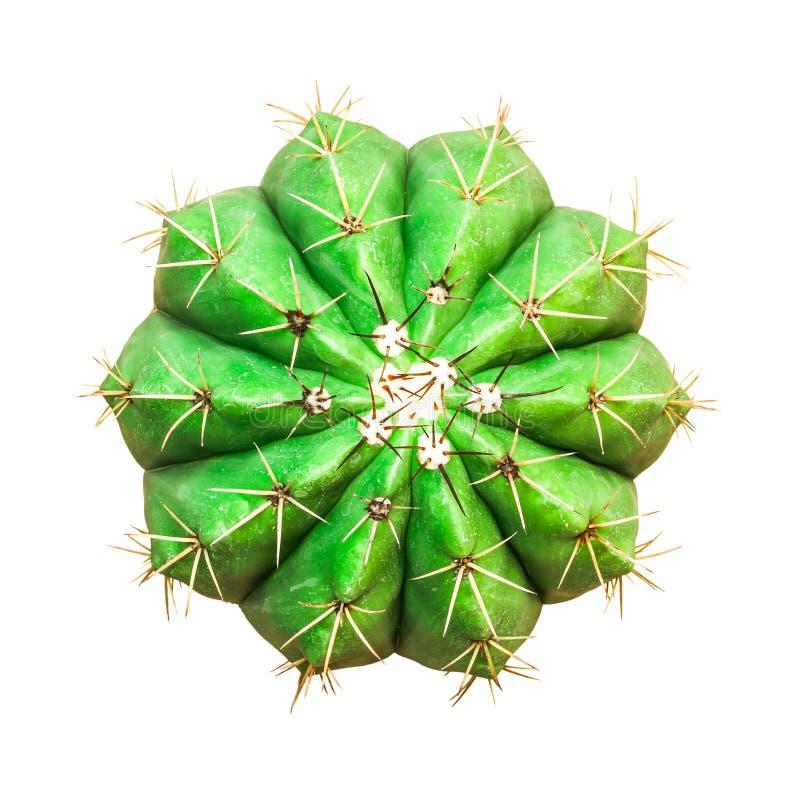 Cactus die op wit wordt geïsoleerdd stock afbeeldingen