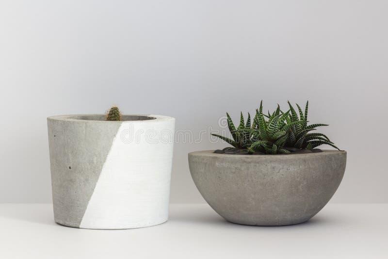Cactus dos en potes del cemento en un blanco aislado foto de archivo