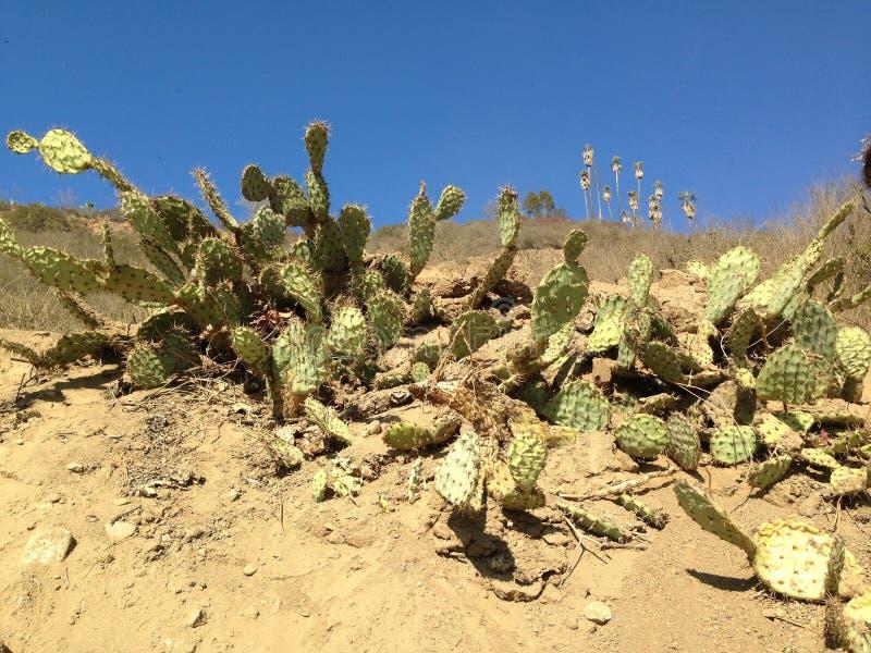 Cactus e PalmTrees fotografia stock libera da diritti