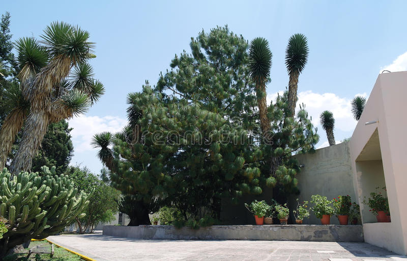 Cactus e piante nella sosta immagini stock libere da diritti