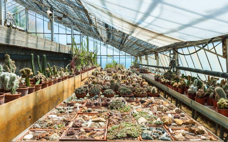 Cactus in een serre in de tuin van uitheemse gewassen Pallanca in Bordighera, Italië. royalty-vrije stock foto's