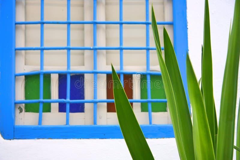 Cactus en blauw venster stock fotografie
