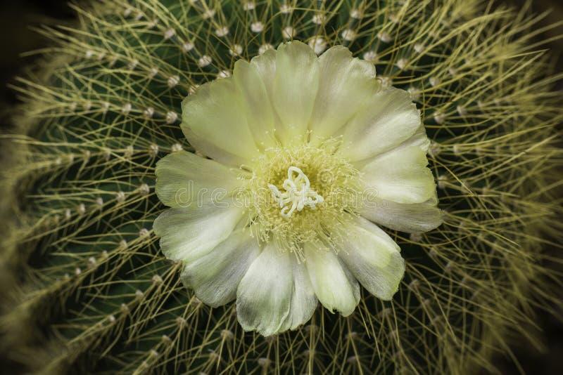 Cactus en bloem stock foto's