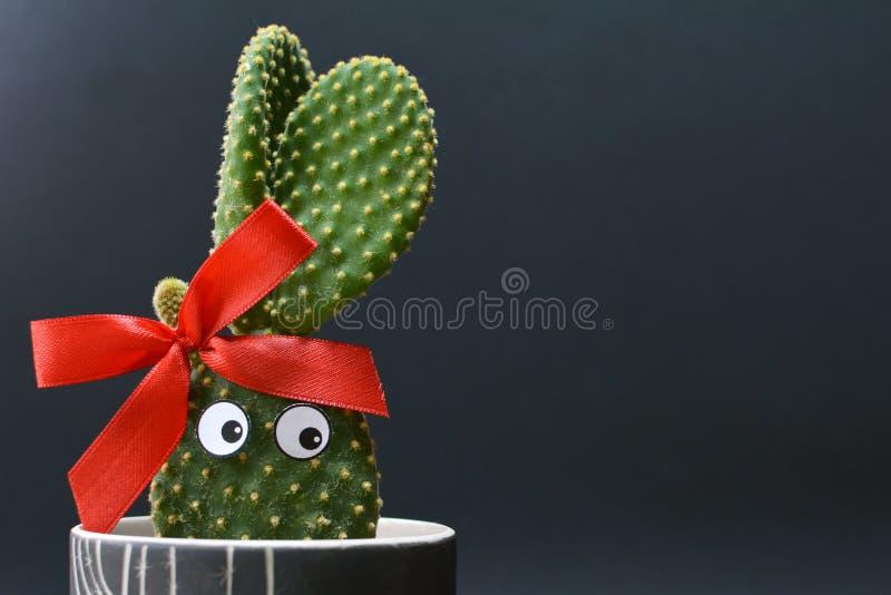 Cactus en conserva divertido de los oídos del conejito de los microdasys de la Opuntia con los ojos googly delante del fondo oscu imagen de archivo libre de regalías