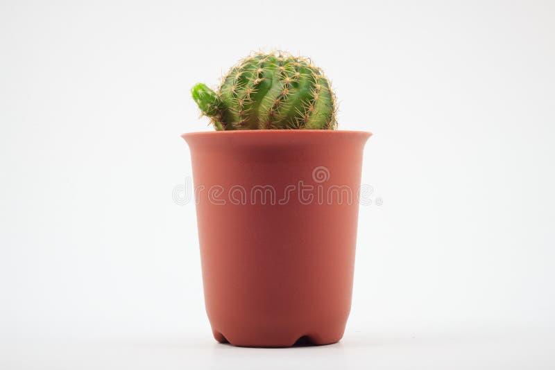 Cactus en crisoles imagen de archivo
